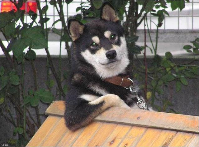 x-box-perro