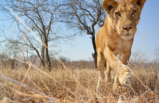 Animales Salvajes De Africa