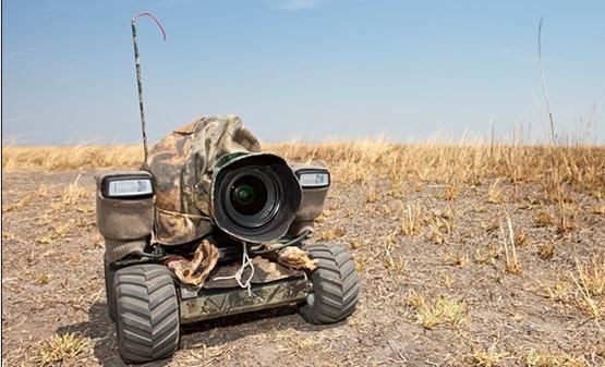 """Fotografías  de animales salvajes en África, con """"BeetleCam"""" las fotos son desde una nueva perspectiva"""
