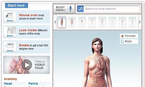 Mapa del cuerpo humano en 3D
