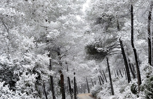 Zona boscosa en Rubi, España cubierta de nieve