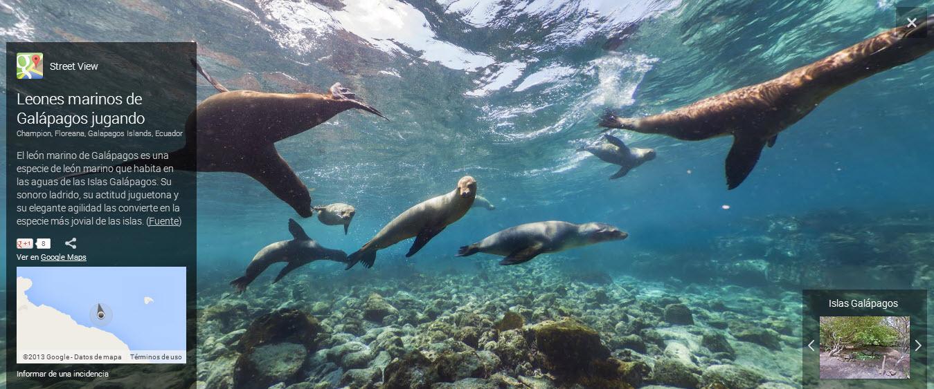 Fotos isla Galápagos, lobos marinos