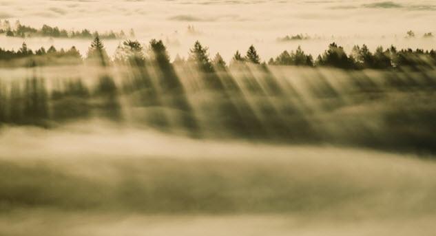 Fondo de pantalla de bosque nublado