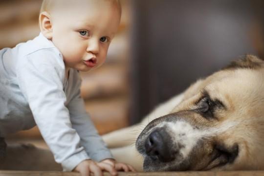 Bebe y perro durmiendo en casa