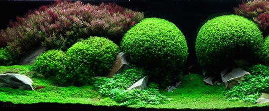 Combinación de plantas para acuarios