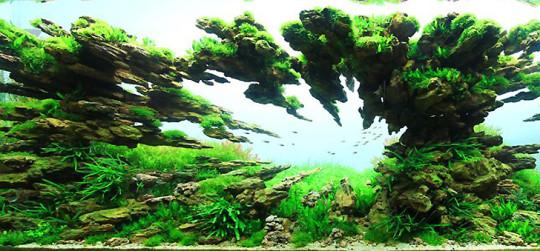 Decoración de acuarios de peces pecera