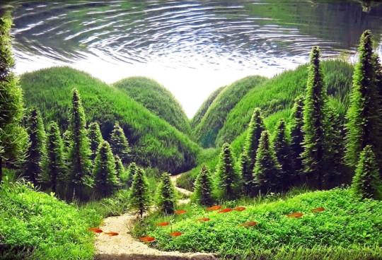 aquascapes-acuario-landscapes